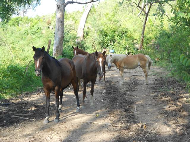 cavalos-na-fazenda-paraiso